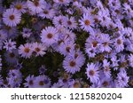 october flowers are blue with a ...   Shutterstock . vector #1215820204