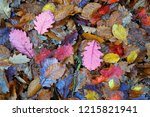 colorful autumn leaves. | Shutterstock . vector #1215821941