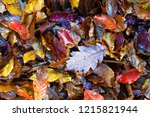 colorful autumn leaves. | Shutterstock . vector #1215821944