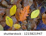 colorful autumn leaves. | Shutterstock . vector #1215821947