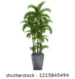 palm isolated on white...   Shutterstock . vector #1215845494