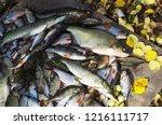 a good catch. bream  pike perch ... | Shutterstock . vector #1216111717