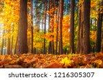 fall. autumn nature landscape.... | Shutterstock . vector #1216305307