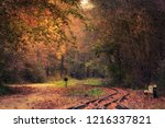photo of colorful autumn forest  | Shutterstock . vector #1216337821