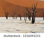 dead camel thorn trees  ... | Shutterstock . vector #1216341211