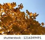orange foliage of beautiful... | Shutterstock . vector #1216349491