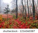 red autumn forest mist scene.... | Shutterstock . vector #1216360387