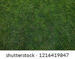 green grass background | Shutterstock . vector #1216419847