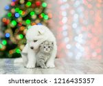Stock photo white samoyed puppy embracing a kitten on a background of the christmas tree empty space for text 1216435357