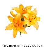 single cluster of bright orange ... | Shutterstock . vector #1216473724