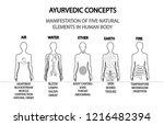ayurvedic concepts.... | Shutterstock .eps vector #1216482394