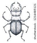 stag beetle tattoo art. lucanus ...   Shutterstock .eps vector #1216485121