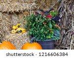 Pumpkins  Ornamental Peppers...