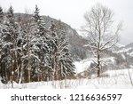winter in schwarzwald. winter...   Shutterstock . vector #1216636597