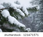Snow Covered Branch Of A Pine