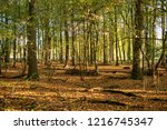 in the morning in the woods....   Shutterstock . vector #1216745347