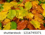 colorful autumn leaves in...   Shutterstock . vector #1216745371