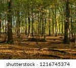 autumn forest at morning light. ...   Shutterstock . vector #1216745374