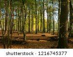 forest in the autumn at morning ...   Shutterstock . vector #1216745377