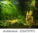 home freshwater rectangular... | Shutterstock . vector #1216757971