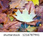 colorful beautiful autumn... | Shutterstock . vector #1216787941