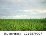 morning sunrise over the green... | Shutterstock . vector #1216879027