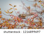 robin perched in a tree | Shutterstock . vector #1216899697