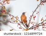 robin perched in a tree | Shutterstock . vector #1216899724