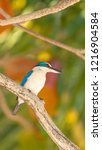 bird  collared kingfisher ... | Shutterstock . vector #1216904584