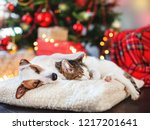 Stock photo cat and dog sleeping under christmas tree pets friends happy new year 1217201641