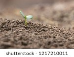 agriculture planting seeding... | Shutterstock . vector #1217210011