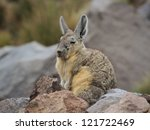 Small photo of Viscacha guard