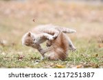 Stock photo two little kittens play outside playful kittens leaping to each other kittens fighting 1217251387