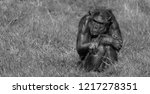 chimpanzee sitting on its own... | Shutterstock . vector #1217278351