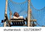 orang utan perched at the top... | Shutterstock . vector #1217283847