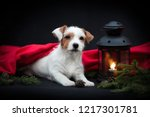 Stock photo portrait of a puppy jack russell terrier lying on a black background with a candlestick and a 1217301781