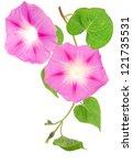 Ipomoea Pink Flowers Tree
