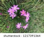 purple flowers in garden | Shutterstock . vector #1217391364
