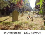 dry dead insect stuck on spider ... | Shutterstock . vector #1217439904