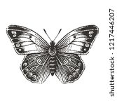 Butterfly. Hand Drawn Engravin...