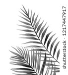 black and white leaves. palm... | Shutterstock . vector #1217447917