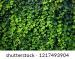 Ivy Plants  Lianas Cover A Wall ...
