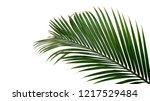 Green Leaves Of Nipa Palm Or...