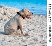 in polynesia beach a dog... | Shutterstock . vector #1217594311