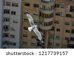 Stock photo european herring gull larus argentatus against apartment blocks in alicante 1217739157