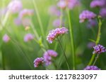 the background image of the... | Shutterstock . vector #1217823097