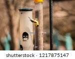 gold finch eating from a seed... | Shutterstock . vector #1217875147