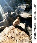 chipmunk  sitting on a rock....