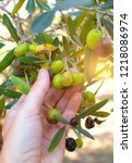hand picking ripe olives from... | Shutterstock . vector #1218086974