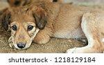 Stock photo cute street puppies 1218129184